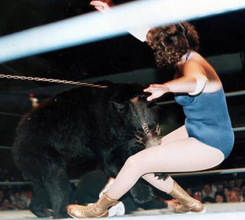 Queen Kong wrestling a bear